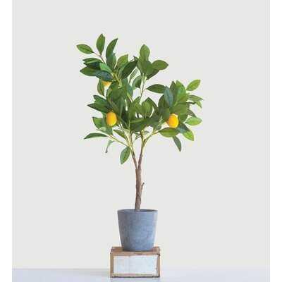 Lemon Tree in Pot - Wayfair