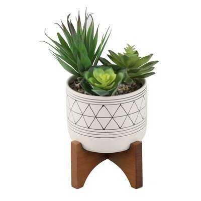 Faux Succulent Plant in Pot - Wayfair