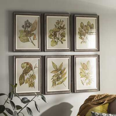 Seedlings 6 Piece Framed Graphic Art Set - Birch Lane