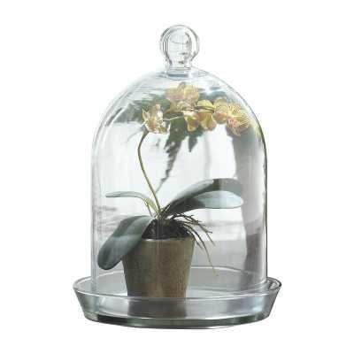 LULU GLASS BELL JAR TERRARIUM - Birch Lane