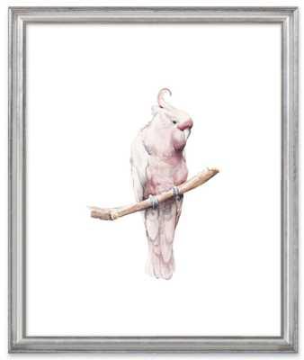 Rose Breasted Cockatoo Watercolor 16x20 - Artfully Walls
