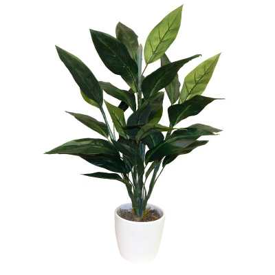 Bird of Paradise Floor Foliage Tree in Planter / 36'' H x 20'' W x 20'' D - Wayfair