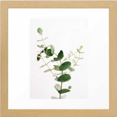"Eucalyptus Framed Art Print, 12"" x 12"" Conservation Walnut - Society6"