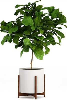 "Fox & Fern Mid-Century Modern Planter support - Fits 15"" pot - Amazon"