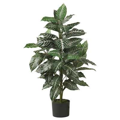 Silk Zebra Floor Plant in Pot - AllModern