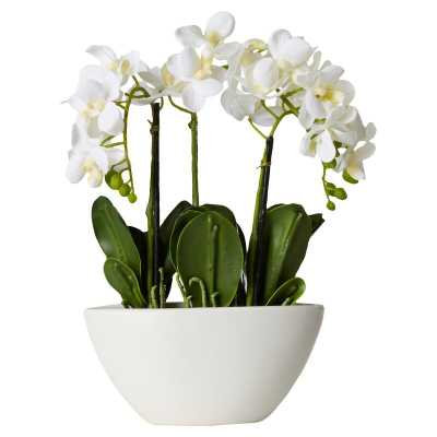 Phalaenopsis Orchid Centerpieces in Ceramic Pot - Wayfair