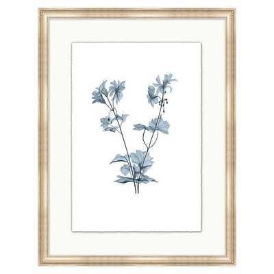 Fragile Blossoms Art - Cornflower Print VI - Ballard Designs