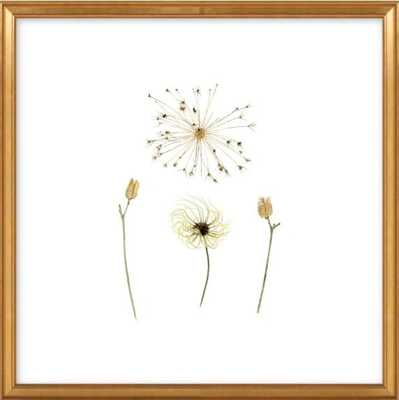 Clematis, Allium, and Daylily  BY JENNIFER STEEN BOOHER - Artfully Walls