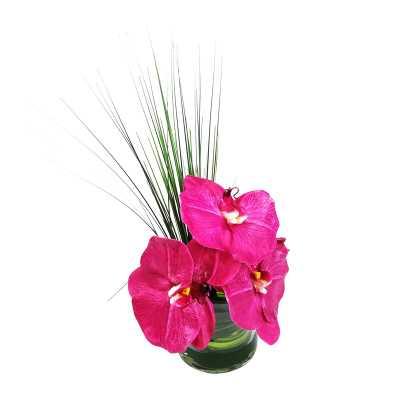 Phalaenopsis Orchid Floral Arrangement in Vase - Wayfair