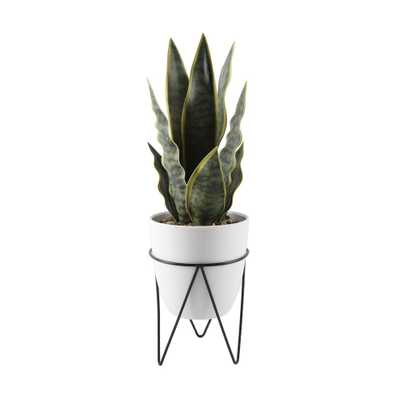 15.25 in. H Faux Snake Plant in 4.75 in. White Pot on Black Metal Stand - Home Depot