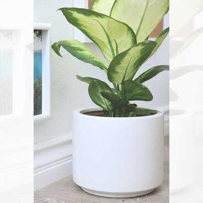 Deltoro Ceramic Pot Planter - Wayfair