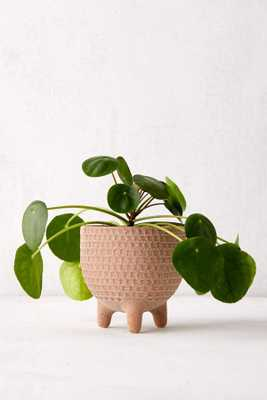 """Sita 6"""" Textured Planter - Urban Outfitters"""