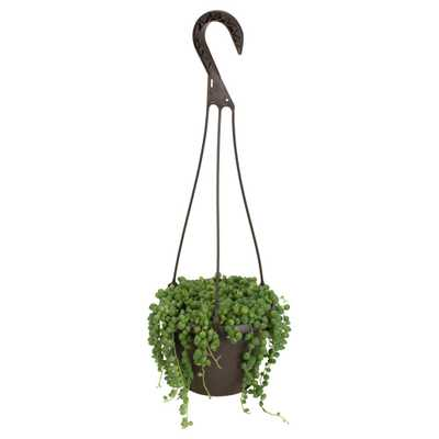 6 in. Assorted String of Pearls Hanging Basket Plant - Home Depot