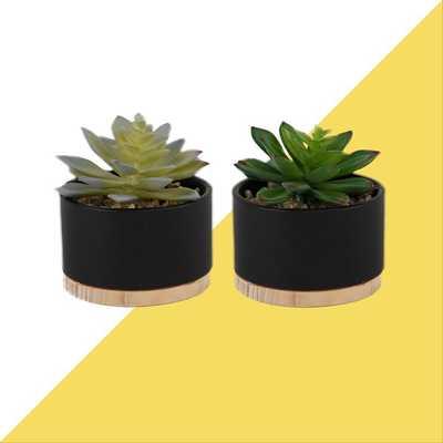 2 Piece Agave Succulent Plant in Pot Set (Set of 2) - Wayfair