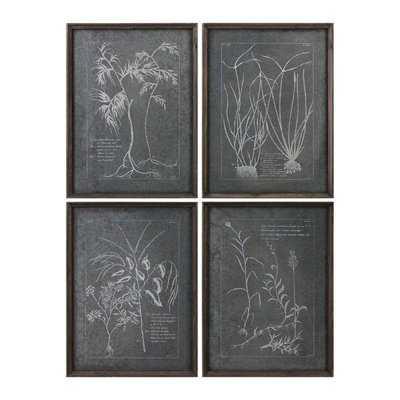 Root Study 4 Piece Framed Graphic Art Set - Wayfair