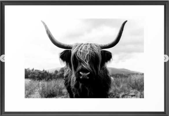 Scottish Highland Cattle Black and White Animal Framed Art Print - Scoop Black, 20x26 - Society6