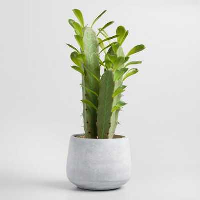 Faux Potted Cathedral Cactus: Green by World Market - World Market/Cost Plus