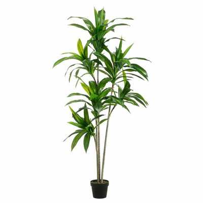 Faux Dracaena Tree With 3 Trunks - World Market/Cost Plus