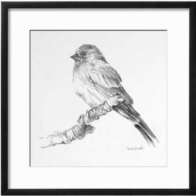 Bird Drawing I By Lanie Loreth - art.com