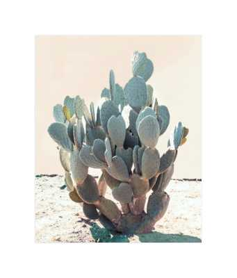 """blue cactus print- 8""""x10"""" white boarder - Minted"""