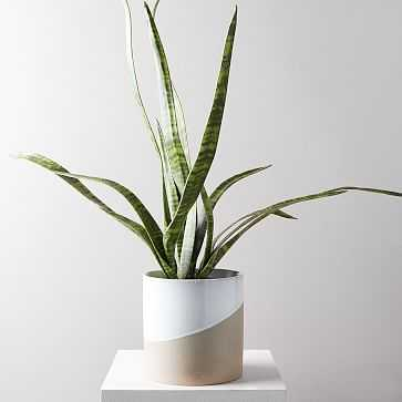 Faux Botanicals, Potted Snake Plant (planter not included) - West Elm
