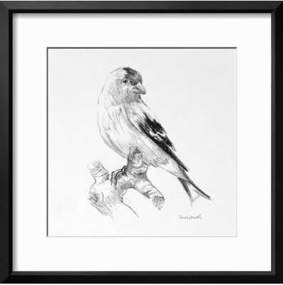 Bird Drawing II By Lanie Loreth - art.com