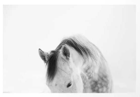Modern Photography White Horse Art - Society6