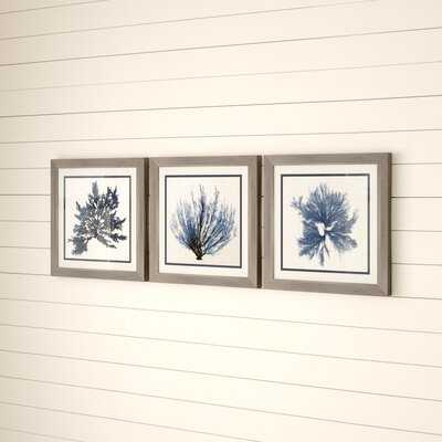 'Coastal Seaweed' 3 Piece Picture Frame Graphic Art Set - Birch Lane