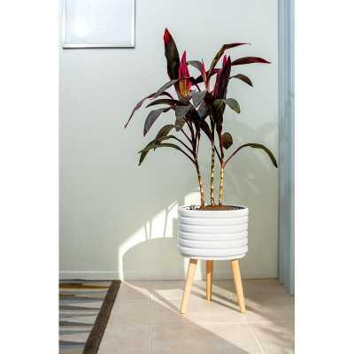 Eastin Groove Ceramic Pot Planter - Wayfair
