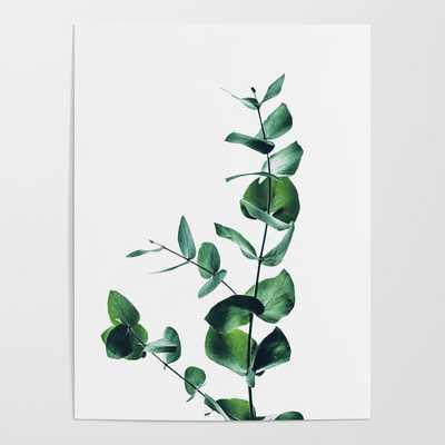 Eucalyptus branch Poster - Society6