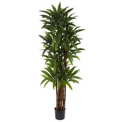 6.5' Dracaena Tree - Fiddle + Bloom
