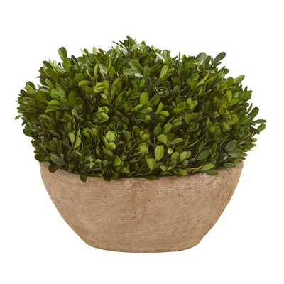 "12"" boxwood preserved plant in oval planter - Fiddle + Bloom"