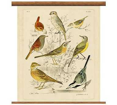 "Vintage Ornithology Collection Educational Chart, Small, 33 x 36"" - Pottery Barn"