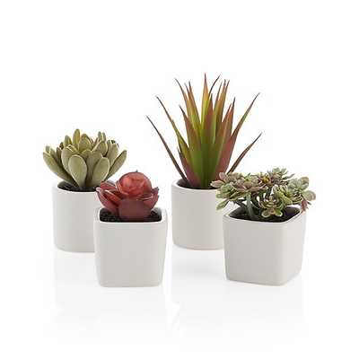 Potted Succulents, Set of 4 - Crate and Barrel