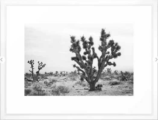 joshua tree bw Framed Art Print, 20x26, white vector frame - Society6