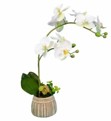 Orchids Floral Arrangements and Centerpieces in Pot - Wayfair
