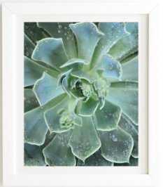 "Succulents, White frame, 14""x16.5"" - Wander Print Co."
