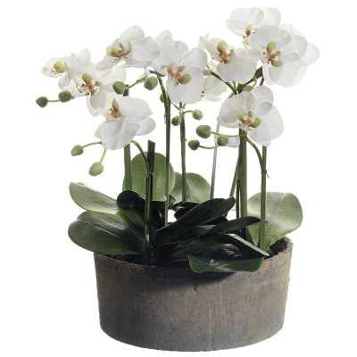 Phalaenopsis Orchid Floral Arrangements in Clay Pot - Wayfair
