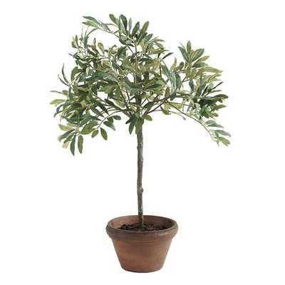"Olive Topiary - 18"" - Ballard Designs"