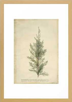 Vintage Botanical Juniper Branch Framed Art Print - Society6