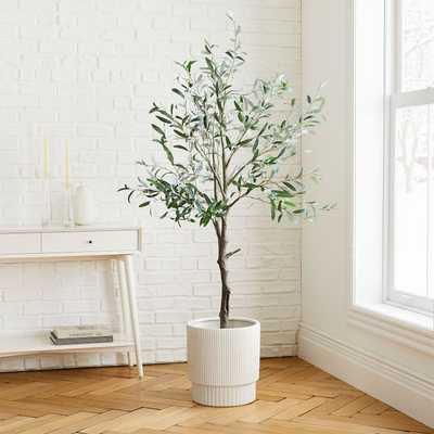 Olive Tree + Large White Fluted Planter Bundle - West Elm