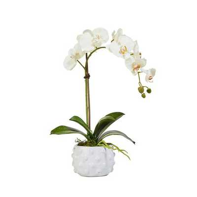 Faux Single White Orchid in Spotted Pot - Caitlin Wilson