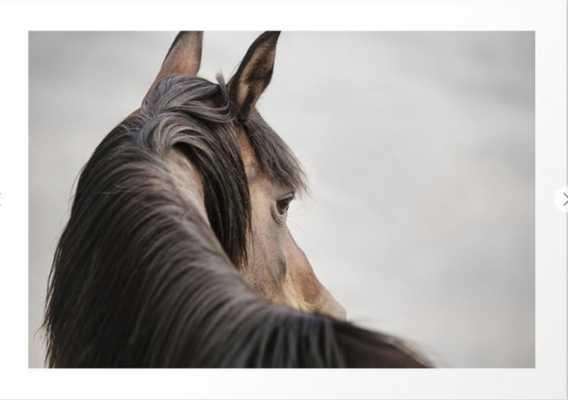 Horse Close Up Photograph, Western Horse Art Print - Society6