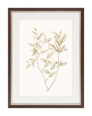 SEPIA BOTANICALS 2 Framed Art - McGee & Co.