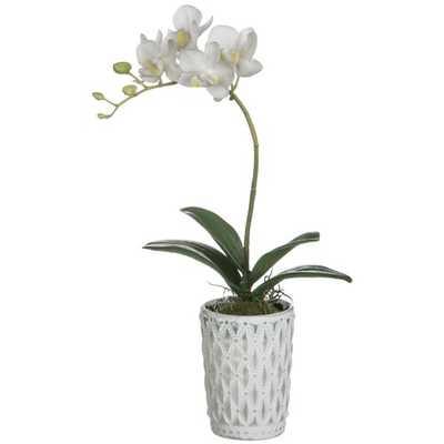 White Phalaenopsis Orchid Floral Arrangement in Pot - Wayfair