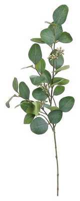 Silver Dollar Eucalyptus Spray Stem - Birch Lane