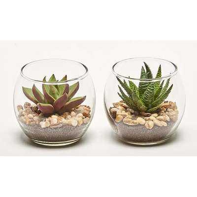 2 Piece Succulent Plant in Pot Set - AllModern