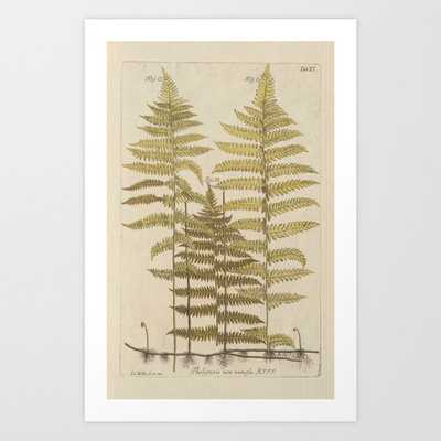 Vintage Fern Botanical Art Print - Society6