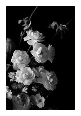 """Black and White Floral Print 14 x 20"""" - Artfully Walls"""