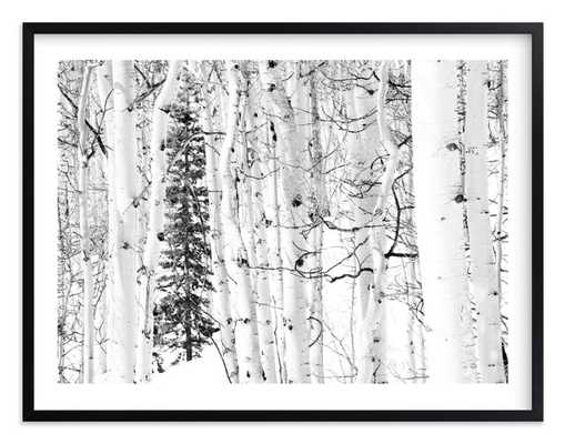 "Colorado Winter Pine - 54"" x 40"" - White Border - Matte Black Frame - Minted"